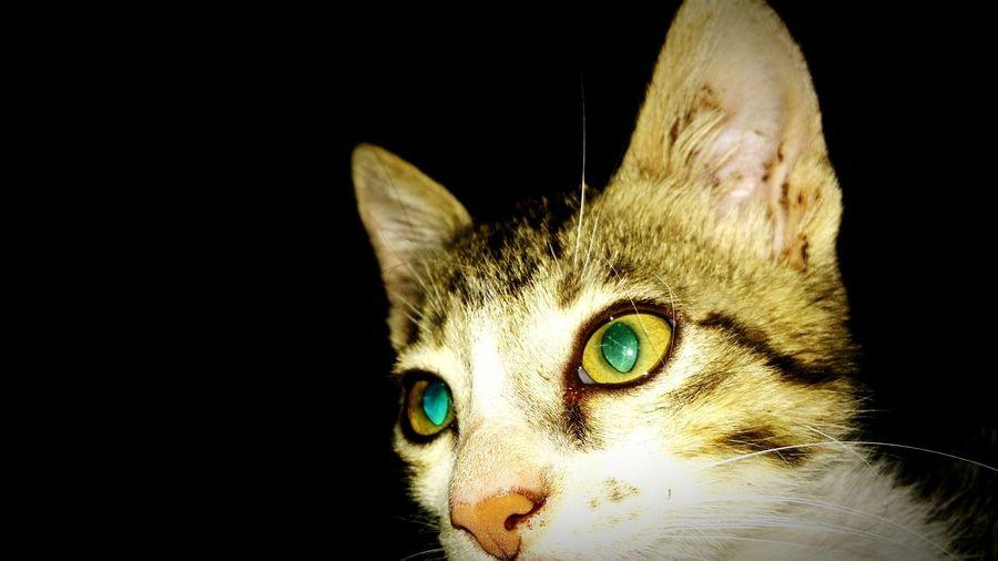 Close-up portrait of cat against black background