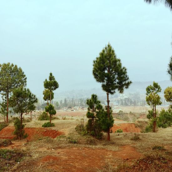Redsoil Tree Landscape No People Nature Clear Sky Day Outdoors Grass Scenery Sky Desolate