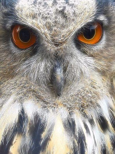 Balou 💕 EuropeseOehoe Owl Art Owls💕 ArtWork Art Artistic EyeEm Birds Bird Bird Photography Birds Of EyeEm