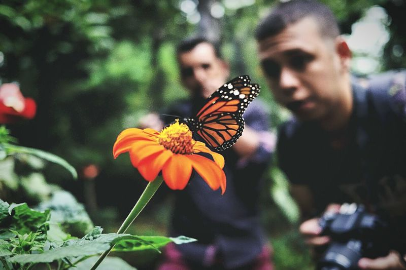 Butterfly Collection Butterfly House Taking Photos Nature Photography Flowers_collection M4/3  DSLR Photography