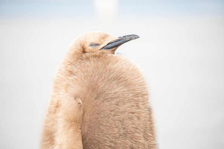 Close-up of penguin at beach