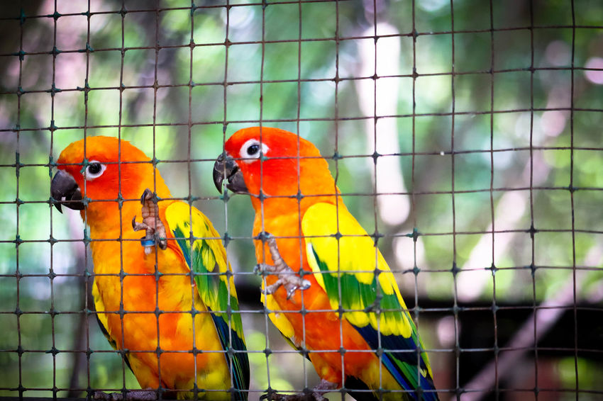 50+ Sun Conure Pictures HD | Download Authentic Images on EyeEm