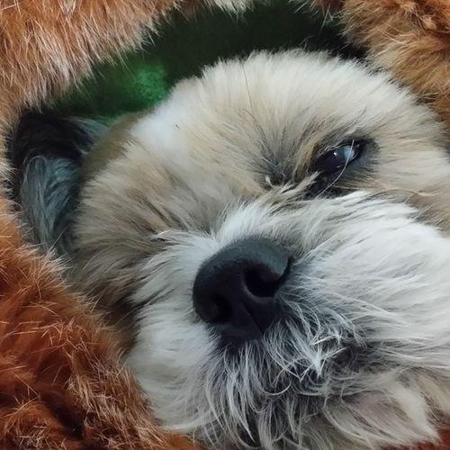 졸려 건들지마 뚱군 비몽사몽 뭘해도 예쁘네~ 몽스타그램 뚱스타그램