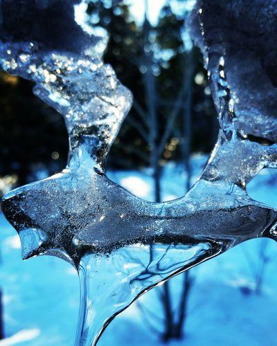 Ice Cozy Winter