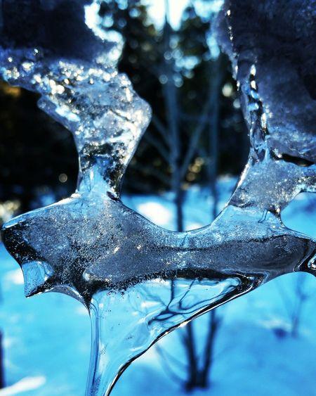 Ice Cozy Winter Sunny Day Wintertime Winterscapes Colorado