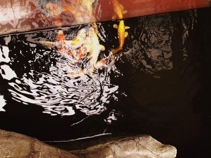 A bunch of greedy guys.鯉魚⋯⋯三月則上渡龍門,得渡為龍矣,否則點額而還。 嘉兴 Enjoying Life Jiaxing My Home My House China Fish Koi Fish Koi Koi Pond