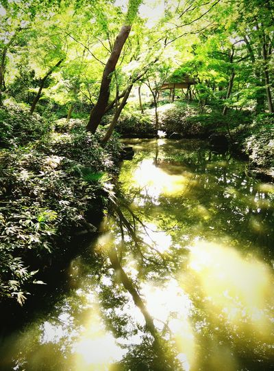 Nature Garden Reflection Water Reflections Trees Japan Water Forest Park One Plus One