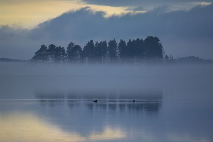 foggy evening Beauty In Nature Calm Cloud Cloud - Sky Cloudy Day Idyllic Lake Landscape Nature Nature No People Non-urban Scene Outdoors Overcast Reflection Remote Scenics Sky Standing Water Tranquil Scene Tranquility Tree Water Weather