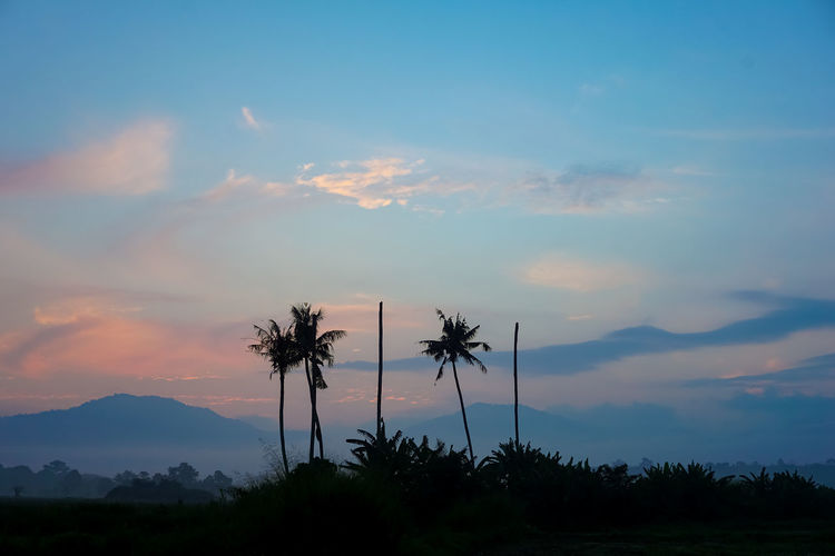 Beauty In Nature Cloud - Sky Coconut Palm Tree Growth Idyllic Mountain Nature No People Non-urban Scene Orange Color Outdoors Palm Tree Plant Scenics - Nature Silhouette Sky Sunset Tranquil Scene Tranquility Tree Tropical Climate