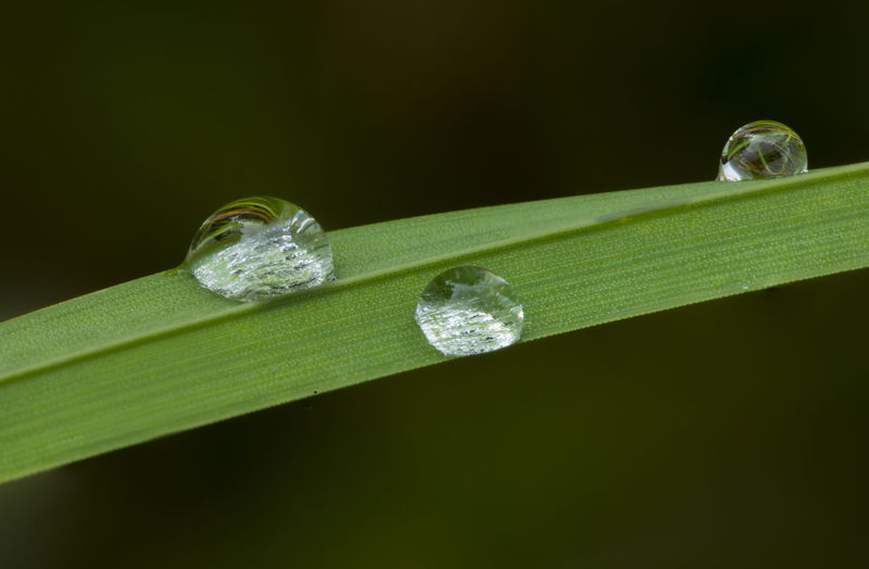Close-up of water drops on leaf against green background