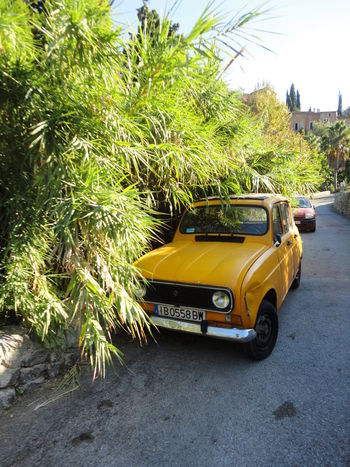 Renault 4 Car City Day Growth Land Vehicle Mode Of Transport No People Outdoors Palm Tree Plant Road Street Transportation Tree