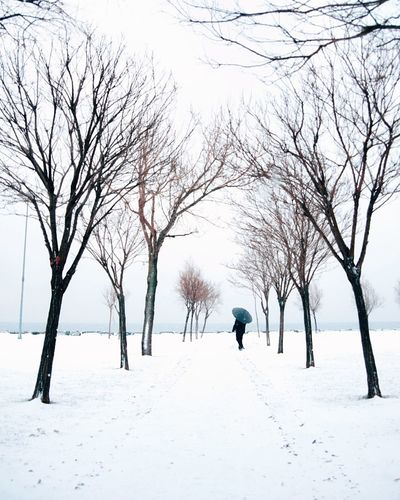 Winter Snow Cold Temperature Dog Bare Tree Full Length Tree Nature Snowing Walking Beauty In Nature Branch One Person My Best Photo