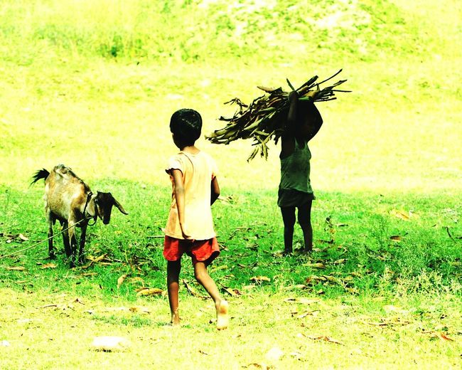 Field Grass Outdoors Agriculture Working Occupation Day Mammal People Children Childhood Children Only Childlabour Still Exist Ugly Truth Childlabour Nikon Poverty Poverty But Happiness The Photojournalist - 2017 EyeEm Awards