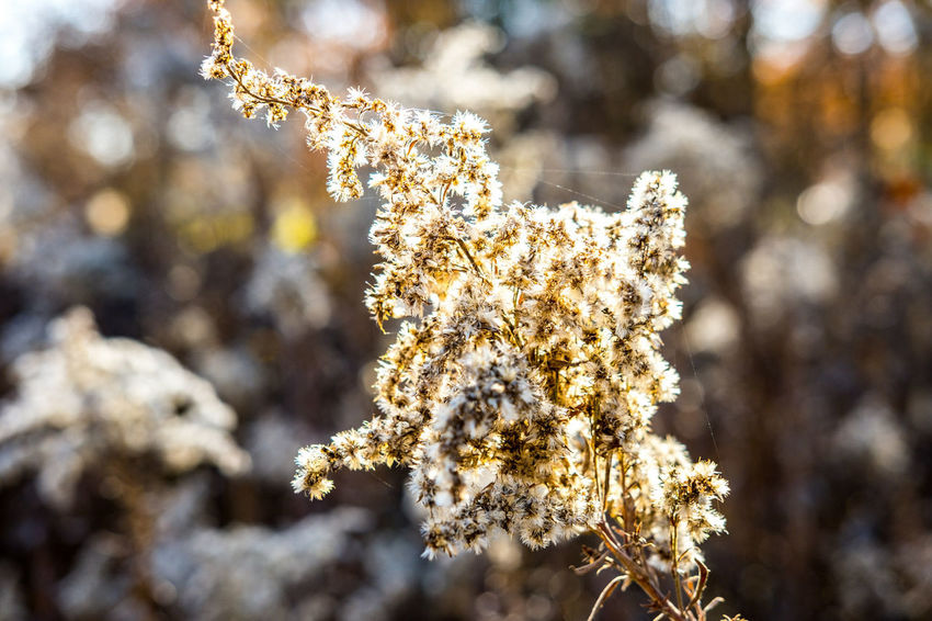 Nature Pinaceae Pine Tree Close-up Plant Focus On Foreground Day No People Outdoors Winter Plant Part Branch Landscape Tree Snow Flower Beauty In Nature Fragility