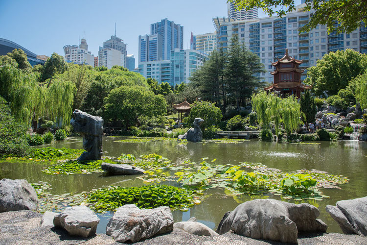 Sydney,NSW,Australia-November 18,2016: Chinese Garden of Friendship and city buildings in Sydney, Australia. Architecture Australia Chinese Chinese Garden Chinese Garden Of Friendship City Garden Gazebo Growth High Rise Landscape Lotus Lush Foliage Outdoors Peaceful Pergola Pond Rock Scenics Skyscraper Sydney Tourism Water Lily Weeping Willow Willow Tree