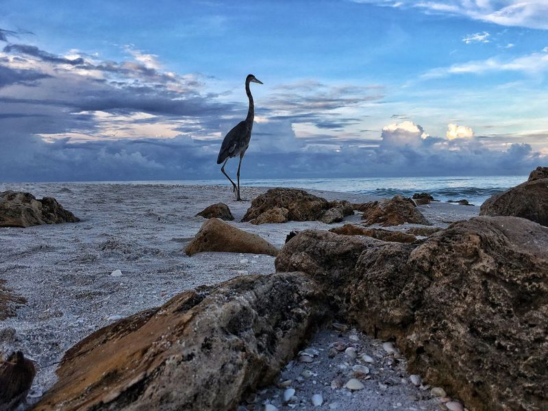 Sea Horizon Over Water Water Full Length Tranquil Scene Standing Tranquility Sky Scenics Rock - Object Nature Cloud Beauty In Nature Cloud - Sky Shore Blue Calm Outdoors Day Non-urban Scene Great Blue Heron