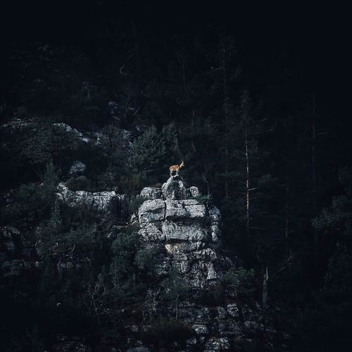 While holy goat greeting us.. EyeEmNewHere Mountain Goat Nature Tree Outdoors Night Forest Full Length Standing Beauty In Nature No People The Great Outdoors - 2018 EyeEm Awards