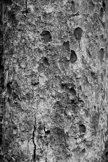 The trunk of a native hardwood tree, using black & white to highlight the rough texture, pitting in its bark. Bark Black And White Blackandwhite Photography Close-up Day EyeEmNewHere Nature No People Outdoors Rough Textured  Textured Detail Textured Effect Tree Tree Trunk Tree Trunk