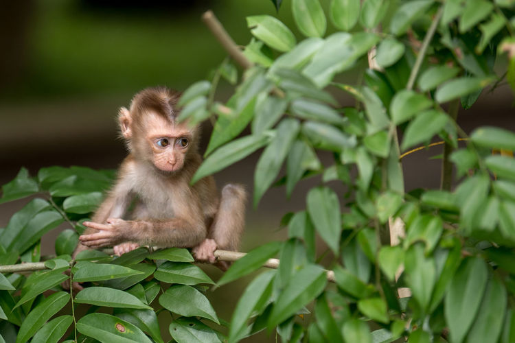 Primate Animal Wildlife Animals In The Wild Mammal Vertebrate One Animal Plant Leaf Plant Part Green Color Young Animal Nature No People Day Portrait Focus On Foreground