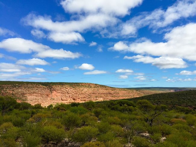 Scenic Landscape in Western Australia Landscape Western Australia Connected With Nature Australia Nature's Design The Great Outdoors With Adobe Travel Photography Nature Photography Hiking Kalbarri Geological Peaceful View Nature Gorge Valley Red Rock Elevated View Scenics Land Plants 🌱 Landscape_Collection Tranquility Colors Of Nature Sandstone Rock