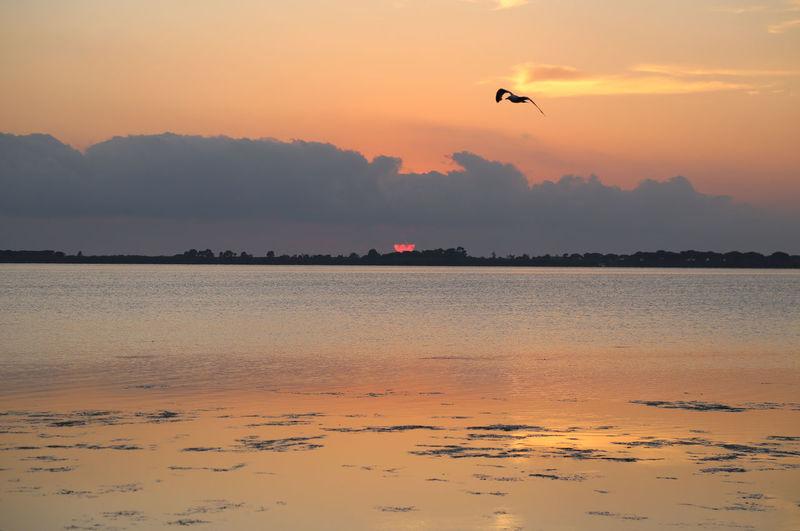 Silhouette Bird Flying Over Seascape Against Sky During Sunset