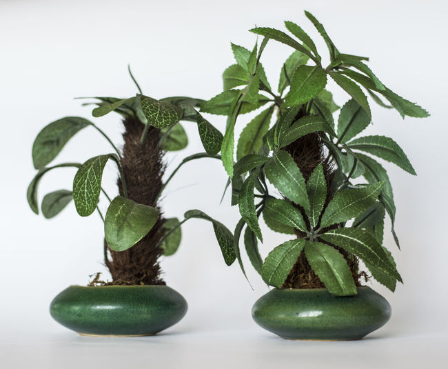 Close-up of green plant on table against white background