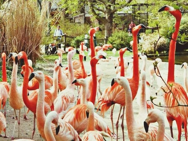 The EyeEm Facebook Cover Challenge Animals Nature Beautiful