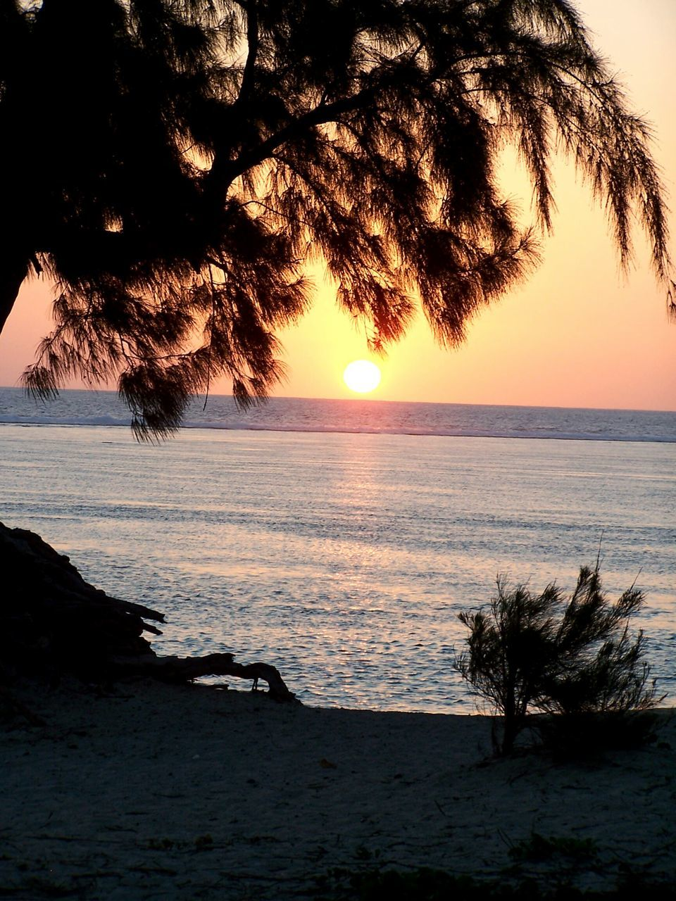 sunset, sun, beauty in nature, sea, nature, scenics, tranquility, tranquil scene, tree, orange color, water, horizon over water, silhouette, beach, sky, idyllic, no people, outdoors, sunlight, sand, day