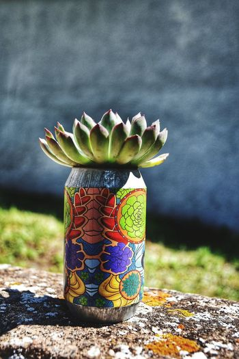 A succulent in
