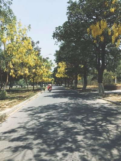 Tree Transportation Road The Way Forward Street Sunlight Full Length Beauty In Nature Sky Day Shadow Land Vehicle Outdoors Nature