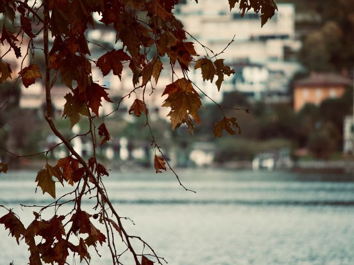 Focus On Foreground Leaf Plant Part Tree Plant Autumn Nature