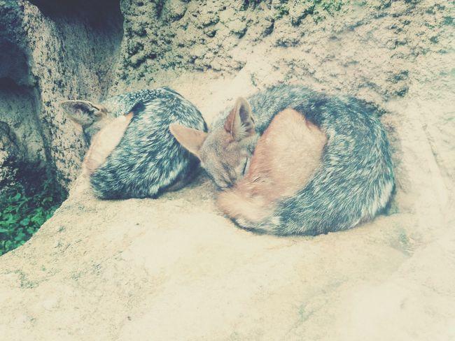 Sleeptime Idkkkk Socute Zoo Animals