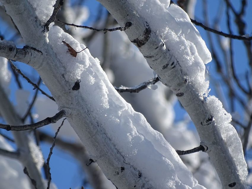 Close-up Winter Low Angle View Sky Cold Temperature Outdoors Day No People Beauty In Nature Tree Ice Snow ❄ Autumn Worland WY Wyoming Branch