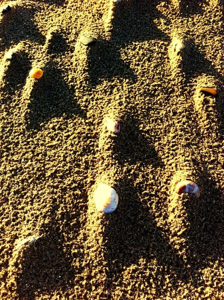 La plage... Les coquillages montés naturellement sur des petits tas de sable