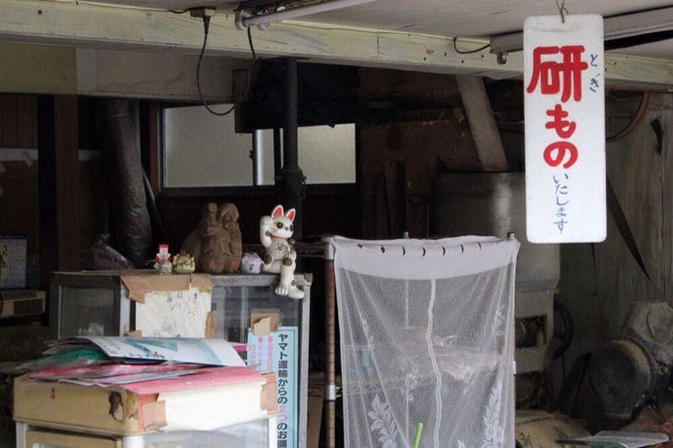 お店の番 猫 Cat