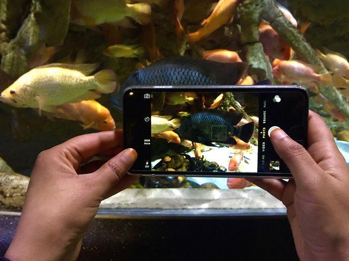 Close-up of hand holding fish in aquarium
