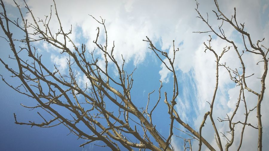 Low angle view of bare tree against cloudy sky