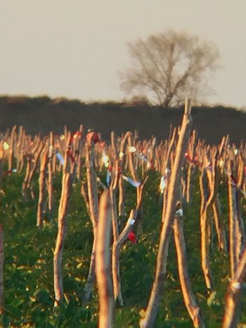 Scarecrows and blackbirds Chuylui Photography Nature Photography The Farm And Its Life