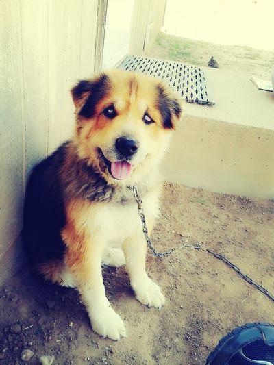 Dog Bestfriend ♥ I Love My Dog