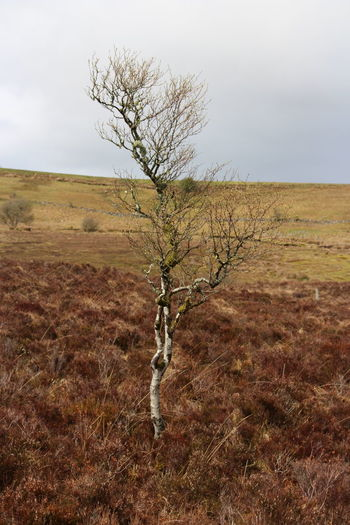 #Mountain #PeacefulMoment #calm #cuilcagh #daytrip #fermanagh #lonely #photography Bare Tree Beauty In Nature Landscape Nature Scenics - Nature Tranquil Scene Tranquility Tree