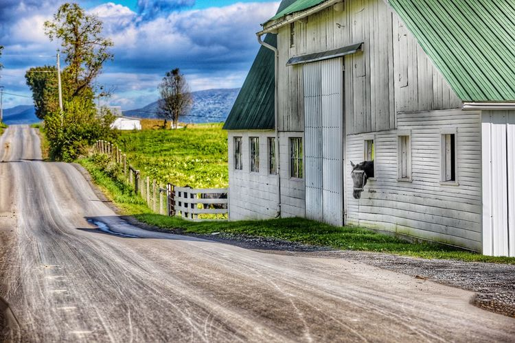 Curious or lonely? JGLowe Amish Country Pennsylvania Landscape Harvest Time Corn Pennsylvania Beauty Horse Built Structure Architecture Building Exterior Cloud - Sky Plant Sky Building Day Tree Road No People Nature Transportation Outdoors Street