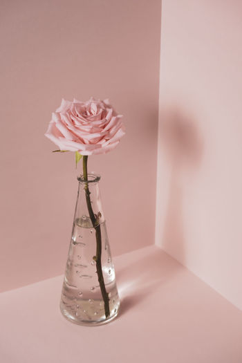 Close-up of pink rose in glass vase on table