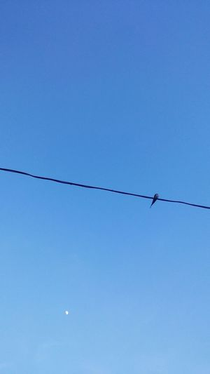 Cable Power Line  No People Clear Sky Sky Bird Blue Wild Nature 🌞☀️☁️☁️