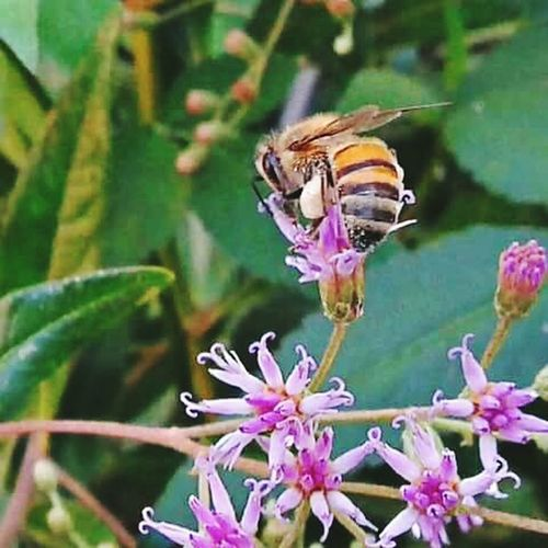 Coisa De Deus Desenho De Deus Natureza Perfeita♡♥ Peruíbe Brasil ♥ Flores Abelha, Flor, Polinización Polination Polinização
