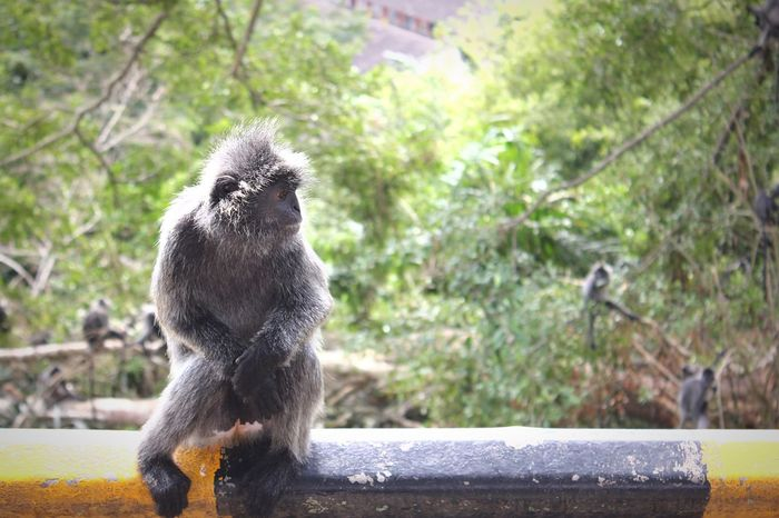 monkey sitting Monkey Monkey Business Animal Wildlife One Animal Animals In The Wild Mammal Focus On Foreground No People Nature Looking Primate Day Tree Outdoors