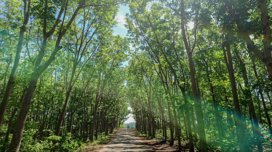 Color Palette Colour Of Life Mahogany Farm Trees Siquijor Visayas Philippines Travel Summer Tourism It's More Fun In The Philippines Environment Conservation Protection Island Hopping