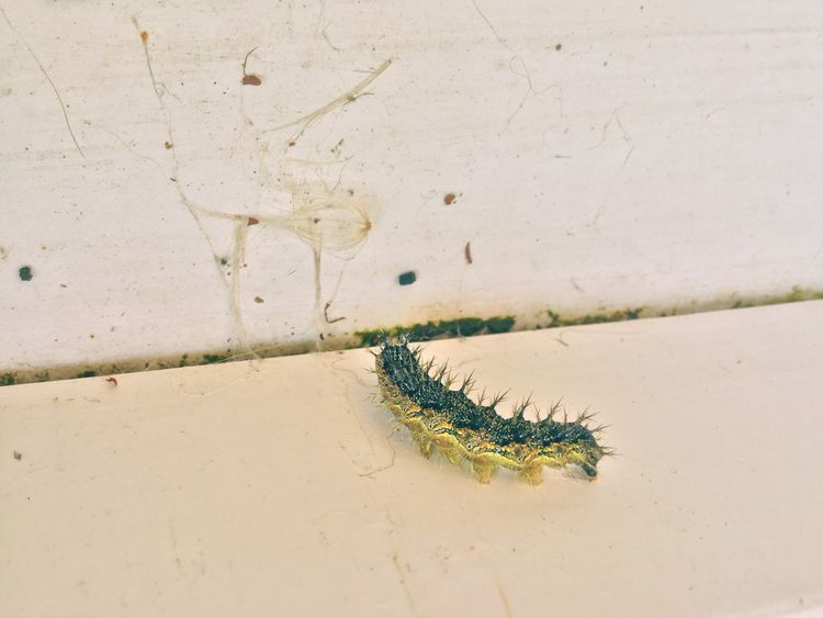 One Animal No People Day Catapiller Insect Nature Nature_collection Nature Animal Themes Outdoors Animals In The Wild Close-up Nature