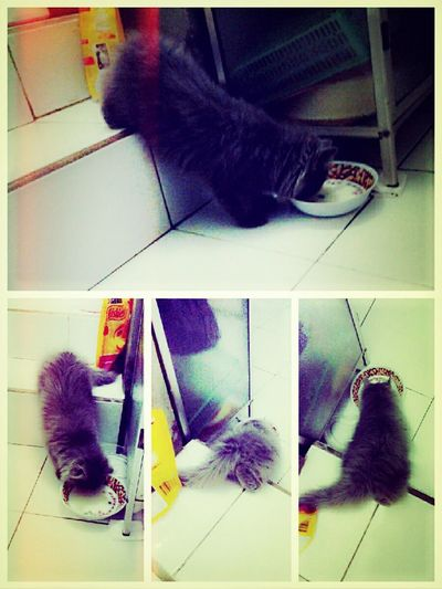 Eat! My Bubu ❤ Cat♡