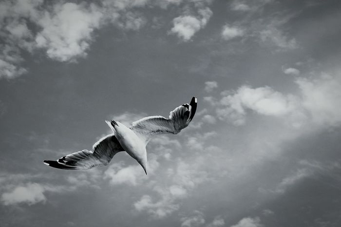 Taking Photos Nature Oneanimal Wildlife Freedom Flying Fly Birds Bird Bird Photography Waitingforsummer No People Eyemphotography Adriatic Sea Eyeemgallery Animal Blackandwhite Black&white Croatia Wind Nature Photography Nature_collection Naturephotography Naturelover Nature Lover