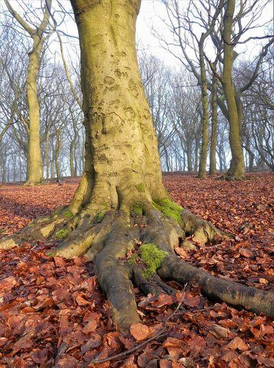 Land WoodLand